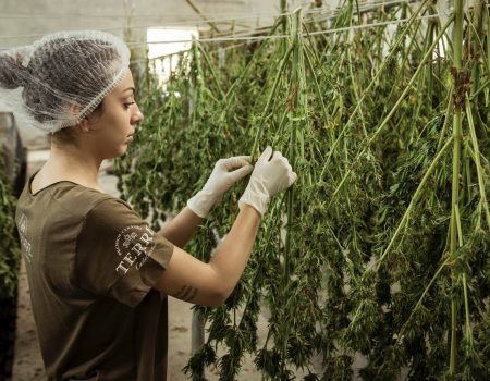 The cannabis industry is hiring and booming!